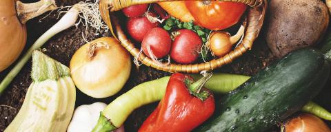 ココノミのテロワール野菜